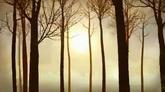 树林高清背景视频素材