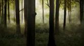 森林云雾缭绕高清背景视频素材