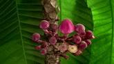 3个各种鲜花开放特写过程高清实拍视频素材