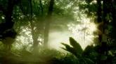 树林中的雾气 晨光透过树林 高清实拍视频素材
