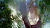朦胧树影 大树光影特写镜头高清实拍视频素材