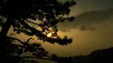 松树 树枝中透露出的阳光高清实拍视频素材