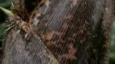 竹笋破土而出快速生长高清实拍视频素材
