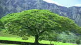 山边上的大树 阳光下的大树 特写高清实拍视频素材