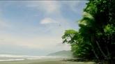 蓝天椰树海滩 海岸风光高清实拍视频素材
