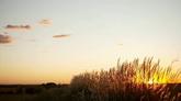 自然美景 黄昏田野风光美景高清实拍视频素材