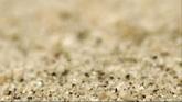 沙粒�S�L�h�犹��高清��拍��l素材