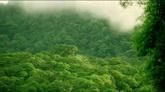 绿色山间雾气天然风景美景高清实拍视频素材