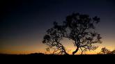 夕阳下的大树自然风光美景高清实拍视频素材