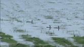 沼泽地里的小舟高清实拍视频素材