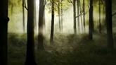 树林光影高清动态背景视频素材