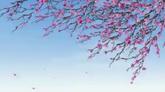 風吹花 花瓣飄落高清動態背景視頻素材