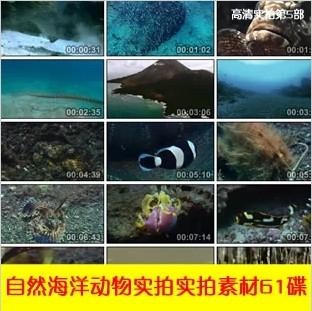 自然风光自然昆虫海洋高科技动物山脉战争高清实拍视频素材61DVD