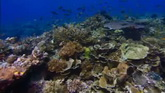 海底世界珊瑚海2个高清实拍视频素材