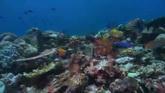 海底世界珊瑚海高清实拍视频素材