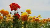 2个绚丽繁花 花丛花朵特写1高清实拍视频素材