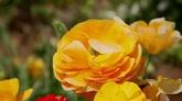 3组绚丽繁花 花丛花朵特写2 高清实拍视频素材