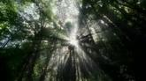 斑驳树影特写高清实拍视频素材