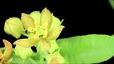 鲜花开放过程高清实拍视频素材