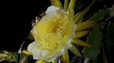 各组鲜花开放高清实拍视频素材