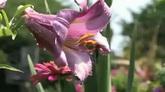 鲜花带水滴特写高清实拍视频素材