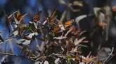 树枝上的蝴蝶 高清实拍视频素材