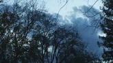 风吹得树叶时间快速流逝高清实拍视频素材