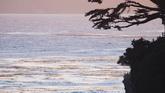 海面上飞翔的海鸥高清实拍视频素材