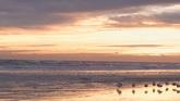 夕阳下的海滩 海鸟AroundTheWater高清实拍视频素材