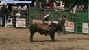 骑牛 高清实拍视频素材