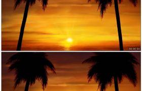 唯美盛夏海边日出的照射 椰树身影背景 高清动态视频素材