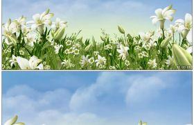 唯美花瓣伸展4 浪漫百合花生长背景动画 高清动态视频素材