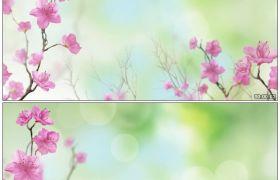 唯美鲜花 镜头慢慢前进 浪漫的鲜花绽放 高清动态视频素材