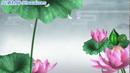 竹露荷风9 荷塘荷花娇艳绽放唯美中国风高清动态视频素材
