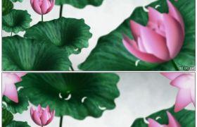 竹露荷风8 荷花荷叶争艳中国水墨风格舞台背景 高清动态视频素材