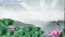 竹露荷风16 荷塘荷莲荷花含苞待放唯美荷花高清动态视频素材