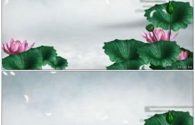 竹露荷风17 ?#21830;?#33655;莲荷花唯美中国风高清动态视频素材