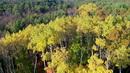 森林树木茂密2 高清实拍视频素材