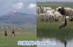 3段草原风光美景高清视频 草原上的牛群和羊群 骏马奔腾壮观景象