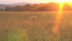 金黄色调夏季日落景观实拍