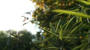 阳光透过漏洞照射的竹园 情况柔美氛围清爽的房地产高清素材