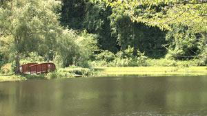 柳树柳荫下宁静的池塘边天然风景美景 水塘倒影
