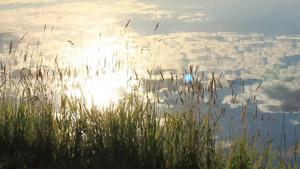 2组清澈湖水水面倒影与草景致