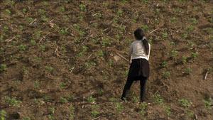 农民整理山坡种植