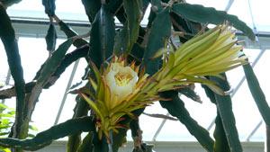 3組花朵快速凋零特寫鏡頭 鮮花凋謝高清實拍視頻素材