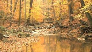 树林里金黄色的秋日风光 浪漫的春色高清实拍