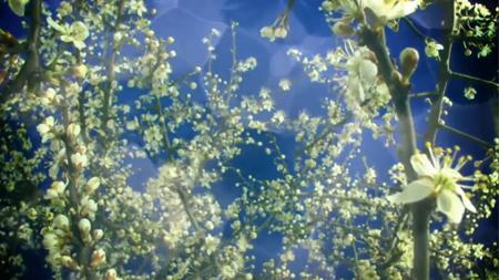 雨水中的花草 優雅清馨高清實拍特寫