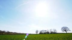 阳光下绿油油的麦苗折射出光晕的田园风光