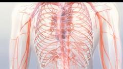 医疗科技 人体3D血管器官模型解剖分析高清动态背景动画