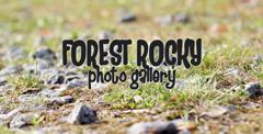 森林中小石块草地上电子相册AE模板 Forest Rocky Photo Gallery